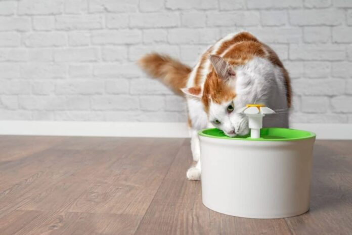 Simple steps to make a pet drinking fountains